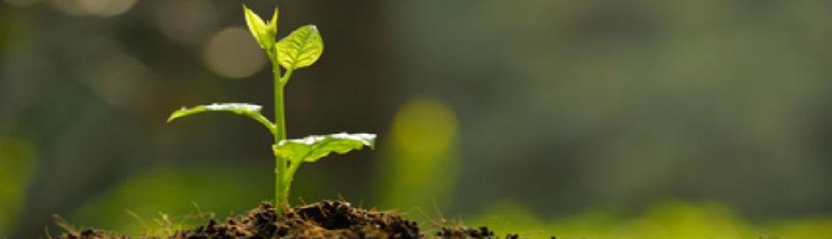 Weltbodentag - schützt unsere Erde!